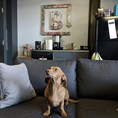 Dogs_of_brandfolder_startup_denver_officedogs_dogsofbrandfolder.jpg - LauraHamelTest file