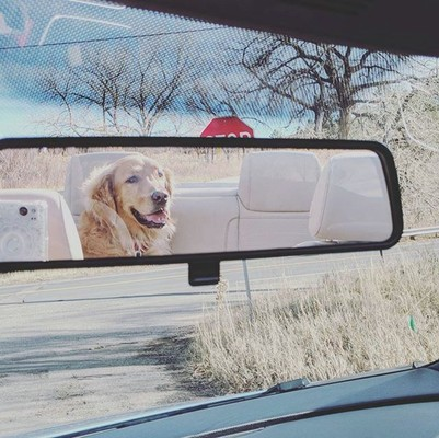 After_a_good_trail_run_its_nice_to_relax_with_the_top_down....goldenretriever_goldensofinstagram_spoiled_thatgoodgood_go.jpg - LauraHamelTest file